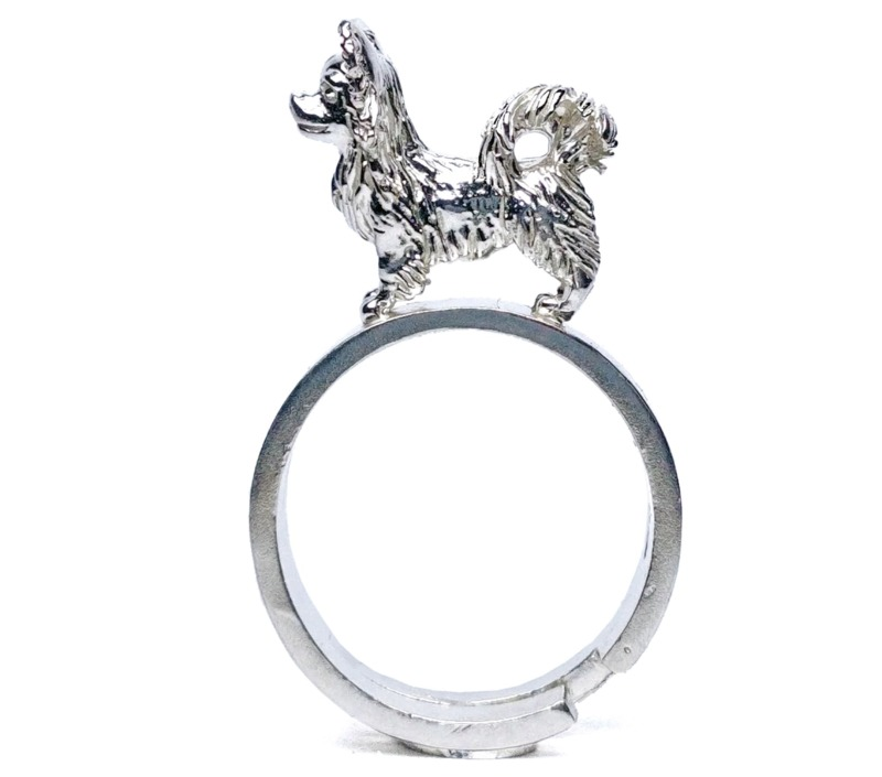 chihuahua-pelo-lungo-anello
